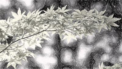 Bild mit Effekt 'Graustufe'