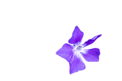 Flower with background removed