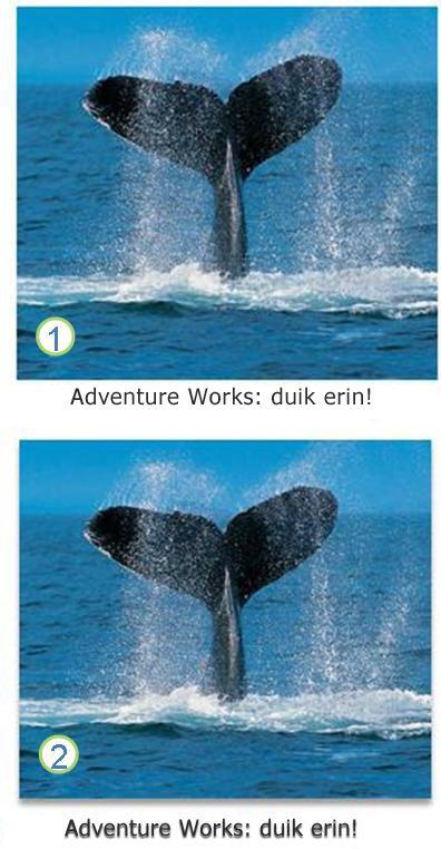 Effecten voor afbeeldingen en tekst